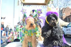 mardi gras dog hundreds of st louis pets strut their stuff at mardi gras parade