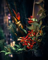 Decoration Of Homes 14 Best Japan Art Winter Images On Pinterest Japan Art