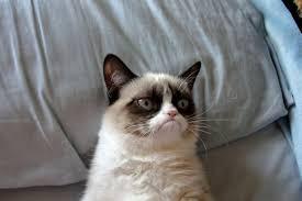 Grumpy Cat Meme Generator - grumpy cat meme blank mne vse pohuj