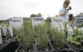 it u0027s fall u2014 let u0027s grow some herbs miami herald