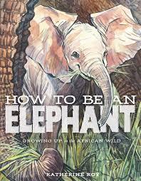 katherine roy studio how to be an elephant