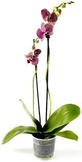 humidifier une chambre plantes pour chambre agrandir une orchidace pour fleurir la chambre