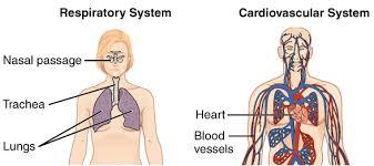 tissues organs u0026 organ systems article khan academy