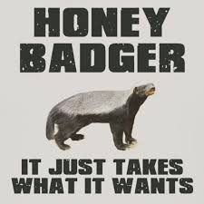 Meme Honey Badger - pin by andrea florez on my patronus pinterest honey badger meme
