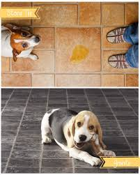 Laminate Flooring And Pet Urine The Most Pet Friendly Types Of Flooring For Your Home U2022 Builders