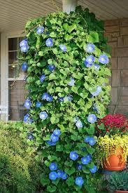 best 25 plants for hanging baskets ideas on pinterest flowers
