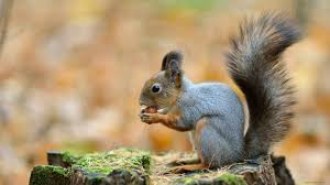 Animals Animal Cute Squirrel Exotic Animals Images For Hd 16 9