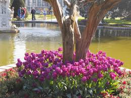 Ottoman Tulip by Tulips In Instanbul Two Travel Addicts