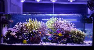led aquarium lights for reef tanks reef aquarium orphek led light reef tank inspiration pinterest
