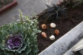 foolproof bulbs for a beginner gardenista