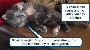 Cheezburger Meme Creator - lolcats lol at funny cat memes funny cat pictures with words