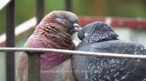 linnud kevadel youtube