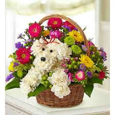 birthday arrangements delivery a dog able in a basket flower essence easton florist serving