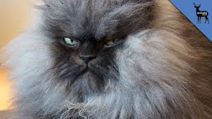 Soon Cat Meme - get well soon colonel meow youtube