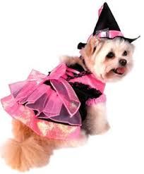 Yorkie Costumes Halloween 120 Yorkies Nines Images Yorkies
