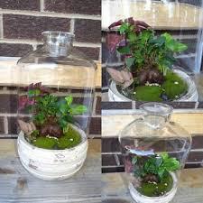bonsai terrarium gumtree australia free local classifieds