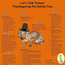 95 best pet safety images on safety tips pet health