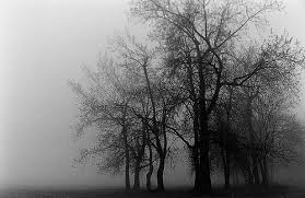 tim burton trees murdoch flickr