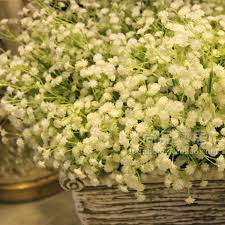 baby s breath high quality pink babys breath seeds gypsophila seeds for growing