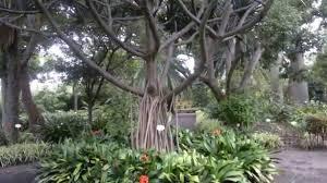 tenerife 2011 puerto de la cruz botanical gardens youtube