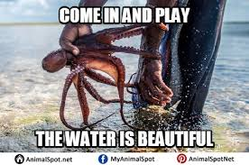 Octopus Meme - pictures of octopus memes png