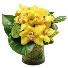 cymbidium orchid cymbidium orchid in houston tx patuju floral