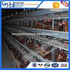 chicken poultry shed design chicken poultry shed design suppliers