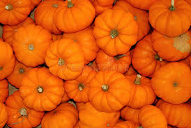 Small Pumpkins Small Pumpkins Stock Photo Image 61239362