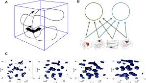 the self organization of grid cells in 3d elife
