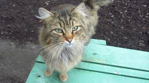 cute cat waiting for me on the bench youtube