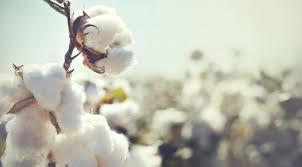 noces de mariage 1 an de mariage nos idées pour fêter vos noces de coton