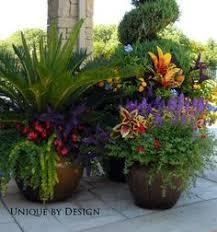 Summer Flower Garden Ideas - container garden palms annuals gardening pinterest