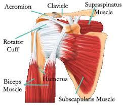 Rotator Cuff Injury From Bench Press Chiropractor In Wellington Keystone Chiropractic How I