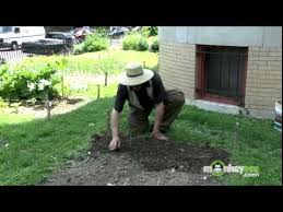 vegetable garden how to plant seeds outdoors youtube