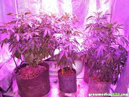 growing autoflower with led lights 250w led grow journal 9 3 oz harvest grow weed easy