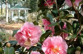 Georgia Botanical Garden by The Gardens