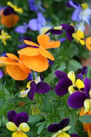 spring flowers in bloom flower pressflower press