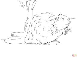beaver coloring page free printable coloring pages