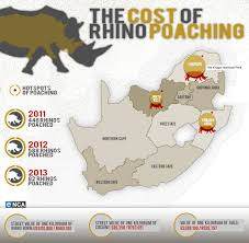 the cost of rhino poaching what is it worth wildlife