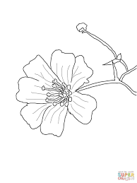 baby u0027s breath flower coloring page free printable coloring pages
