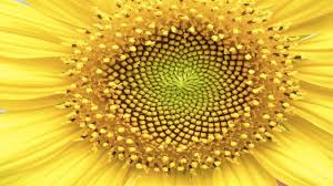 10 beautiful examples of symmetry in nature youtube