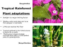 Plants In The Tropical Rain Forest - powerpoint biomes