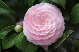 beach house rentals charleston sc check out world class camellias