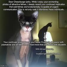 Hairless Cat Meme - funny hairless cat memes funny cute angry grumpy cats memes