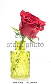 Single Stem Glass Vase Object Rose Stem Vase Stock Photos U0026 Object Rose Stem Vase Stock