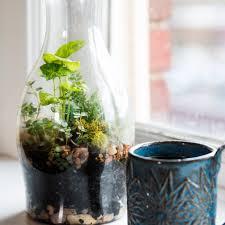 go green at home with this diy terrarium diy terrarium terraria