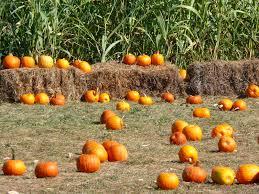 fall pumpkins wallpaper mlewallpapers com pumpkins corn and hay