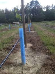 Blue X Plant Shelters Ison U0027s Nursery U0026 Vineyard