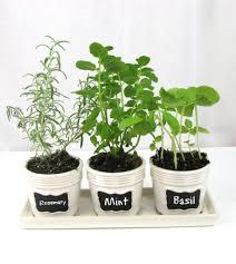 Kitchen Herb by Kitchen Window Herb Garden Home Design Ideas