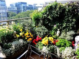 balcony container gardening in toronto historic toronto